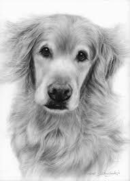 canine art pet portrait u0026 wildlife artist danguole serstinskaja