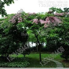 senna spectabilis safflower seed powder cassia cassia beautiful