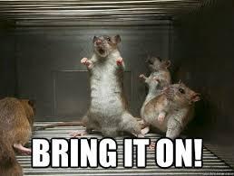 Rat Meme - 17 best rat memes images on pinterest rats pet rats and rodents