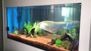 decor winsome appealing glass big fish tanks for sale and