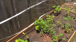 how to make a cheap and easy garden trellis youtube