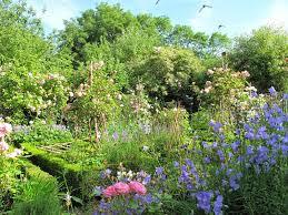 joanne u0027s cottage garden roses in my vegetable garden