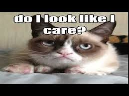 Best Grumpy Cat Memes - the grumpy cat meme funniest the grumpy cat meme compilation 2015