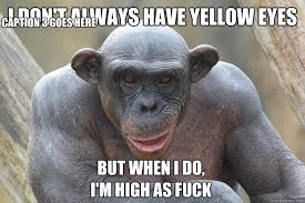 Fuck The World Memes - the most interesting chimp in the world memes quickmeme