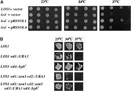 division of labor among the yeast sol proteins implicated in trna