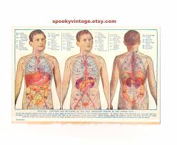 Female Anatomy Organs Women Human Body In Pic Male And Female Anatomy Complete Cm 01