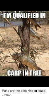 im qualified in carp in tree puns are the best of jokes