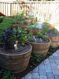 Half Barrel Planters by Garden Design Garden Design With Amazon Com Genuine Oak Wood