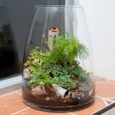 grow herbs in a terrarium wearefound home design
