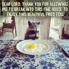 Funny Raccoon Meme - funny pics 33 of the random crazy weird hilarious team jimmy joe