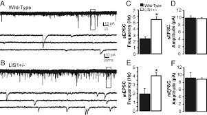 lis1 deficiency promotes dysfunctional synaptic integration of