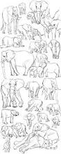 25 paintings elephants ideas drawings
