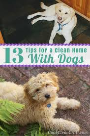 How To Keep A Clean House 13 Tips For A Clean Home With Dogs Cook Clean Craft