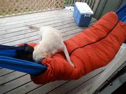 hammock camping squawesomeness