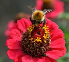 native plants for bees plants for bees
