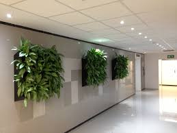 plants for the office interior design