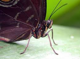 the butterfly is a wonderful creature butterfly facts