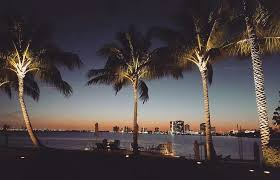 coconut palms properly lit with in ground led landscape lighting