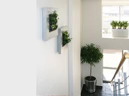 indoor office plants south africa indoor office plants