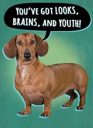 funny dachshund cards cardfool free postage included