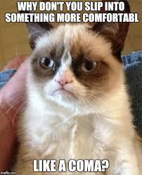 Grumpy Cat Coma Meme - grumpy cat meme imgflip
