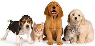Pet Certified Pre Owned Pets On Sale At Kokomo Humane Society Kp