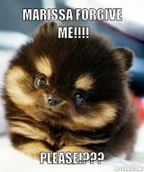 Cutest Memes - 22 best cutest memes ever images on pinterest ha ha funny animals