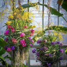 Chicago Botanic Garden Events Chicago Botanic Garden Orchid Show Urbanmatter