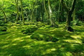 tree apron moss for v