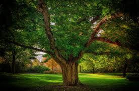 tree photos on flickr flickr