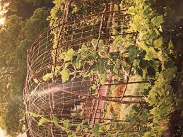 natural stick trellis house other pinterest gardens