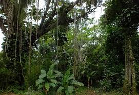 jungle scene clipart china cps