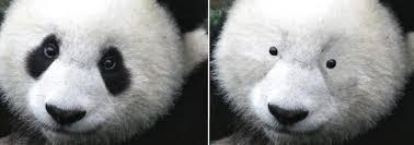 Panda Mascara Meme - panda eyes archives katie bulmer cooke