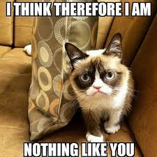 Frown Cat Meme - 16 of the best grumpy cat memes catster