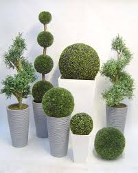 potted topiary plants solidaria garden