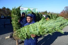 coast guard training center gets christmas trees military com