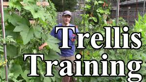 2 min tip how we train crops up trellises vertical gardening