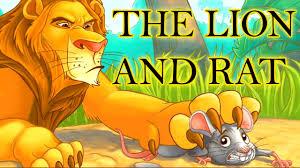 lion rat