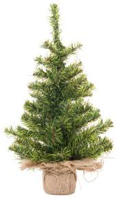 live christmas trees live pine trees are a green choice for christmas decor live