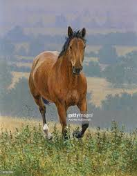 mustang horse running brown horse running in countryside stock illustration getty images