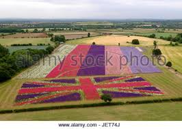 Real Flower Petal Confetti - aerial view of fields of delphiuniums at the real flower petal
