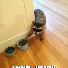 Funny Animal Memes Tumblr - funny animal memes pictures photos and images for facebook tumblr