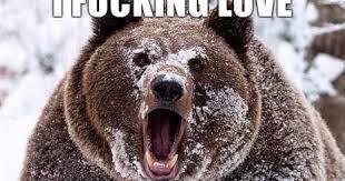 Bear Cocaine Meme - 22 meme internet i fucking love cocaine cocaine snow bear drugs