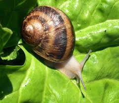 Where Can You Find Snails In Your Backyard Snail Farming Modern Farming Methods