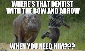 Chase Meme - hippo chase imgflip
