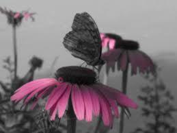 growing more butterflies in south east queensland gecko hills to 7dc444df ceb6 4536 8c9a 53755c744b61 jpg