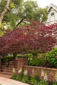 redbud native plant nursery forest pansy redbud monrovia forest pansy redbud