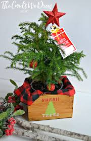 30 minute gift idea fresh trees mini tree planter the cards we drew