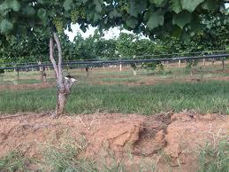 eye of the hurricane robert clay vineyards