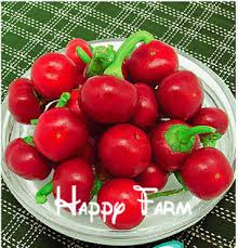 compare prices on ornamental fruit shopping buy low price